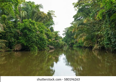 View over a jungle landscape seen from a boat in Tortuguero national park, Costa Rica.