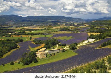 View over the lavander fields of sault