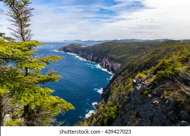 View over part of the beautiful East Coast Trail in Newfoundland, Canada.