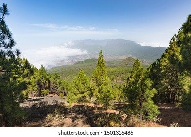 View over the pine forest of the Cumbre Vieja down to the El Paso valley in La Palma, Spain.