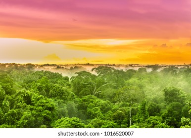 View over pink sunset over the Amazon rain forest in Brazil