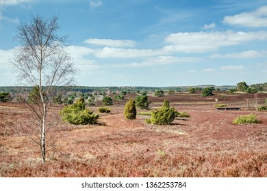 View over the Radebach valley in the nature reserve Lueneburger heath one of the largest contiguous and varied heathland in Central Europe.