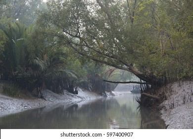 View over the river in the Sundarbans national park, famous for its Royal Bengal Tiger in Bangladesh
