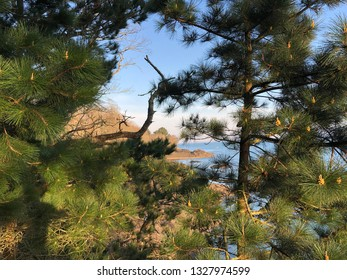 View over the rocks and the sea from a park through some pine tree branches.