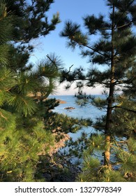view over the rocks and the sea from a park through some pine tree branches