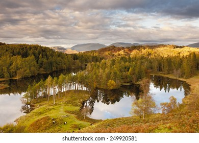 A view over Tarn Hows.