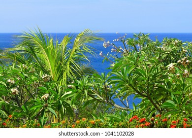 View over the tropical green plants and flowers. Exotic coastline with palm tree, vegetation and calm blue ocean.
