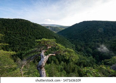 View over a valley in the direction of mount Brocken, the Harz national Park