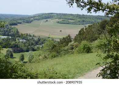 View over vineyard and countryside from Box Hill near Dorking. Surrey. England. With heat haze.