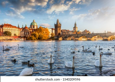 View over the Vltava river with swans swimming on the water to the Charles Bridge and old townscape of Prague, Czech Republic, during a golden autumn sunset
