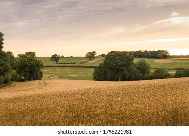View over wheat fields & hedgerows & rolling hills in English countryside during summer on cloudy day