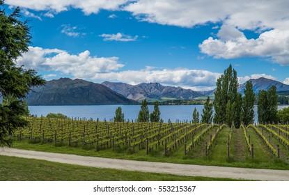 View over winery at Wanaka lake, New Zealand