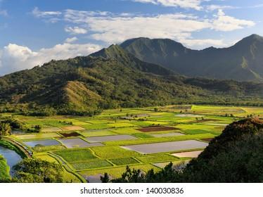 View overlooking the taro fields on Kauai, Hawaii