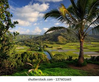 A view overlooking traditional taro fields on the Hawaiian Island of Kauai