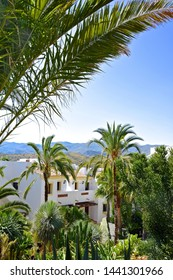 View overlooking white Spanish villas surrounded by exotic plants, palm trees