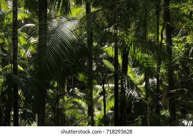 View of the palm crowns