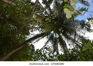 View to palm in sky