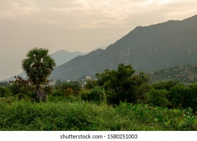 View of Palm tree in foreground and rural area with mountain background with focus set on Palm tree.