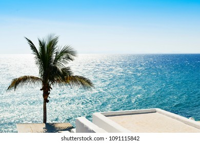 a view of a palm tree and a typical whitewashed house in Puerto del Carmen, in Lanzarote, Canary Islands, Spain, with the ocean in the background