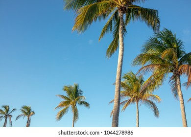 View of palm trees against blue sky