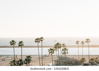 View of palm trees and beach at sunset in Corona del Mar, Newport Beach, California