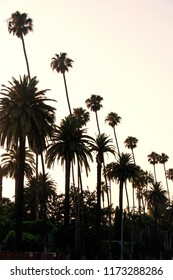 A view of palm trees during sunset in West Hollywood, California in summer time