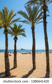 A view of Palm Trees on Levante Beach in Benidorm, Spain.  The Rock of Benidorm, also known as Peacock Island, is in the distance.