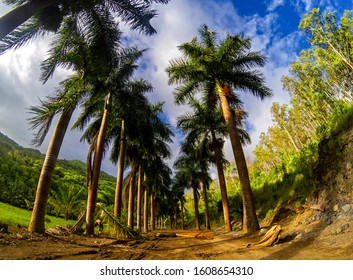 View of palm trees on a trail located at Maconde, Mauritius