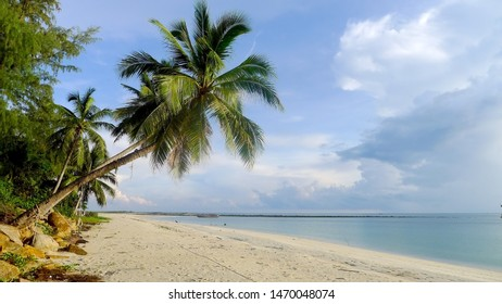 View of palm trees on the tropical beach