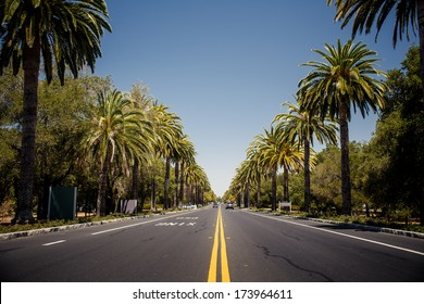 View of palm trees road in California, USA