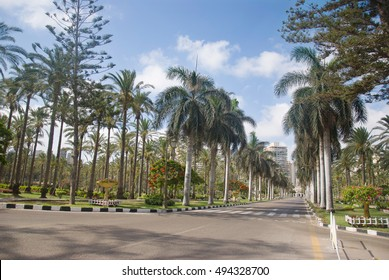View of palm trees road on the stereet