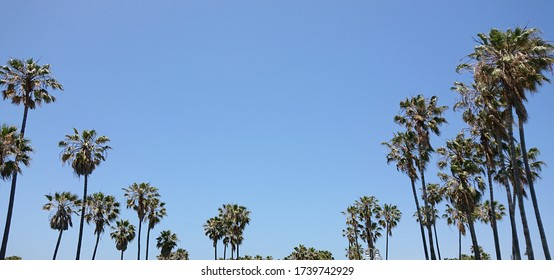 View of the palm trees at Venice beach in Los Angeles in California