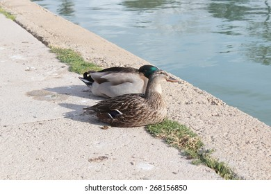 View of Palma de Mallorca, Spain. Mallorca Island. Duck