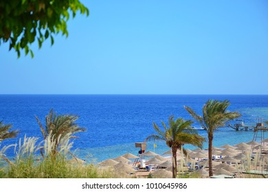 View of palms, beach, and the red sea in Egypt