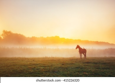 View of pasture with Arabian horse grazing in the sunlight. Dramatic scene and picturesque picture. Location place Carpathian, Ukraine, Europe. Beauty world. Soft filter. Warm toning effect.