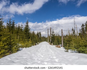 The view of pathway through snowy Sumava mountains, with green pine forest along the road. High Tatras, Slovakia