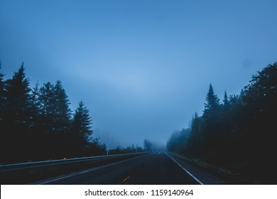 View of paved dark roadway running away in fog between black evergreen trees in mist