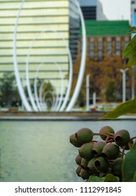 View of the Perth Waterfront from the Elizabeth Quay Park walkway, seen through a bunch of Gumnuts