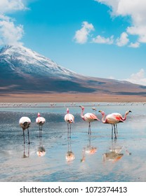 View of pink flamingo lake on the border between Bolivia and Chile