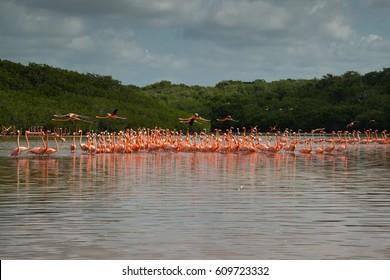 View of pink flamingos in Celestun, Mexico