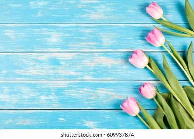 View of pink tulips on a blue wooden background.