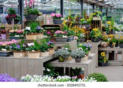 View of plants and flowers in a flowers shop