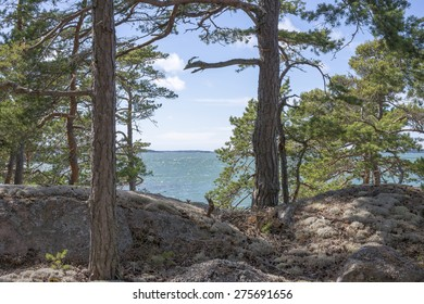 A view to the Pohjanlahti sea from the midst of  pine trees on a sunny day during the midsummer in Pohjanlahti in Kustavi, Finland, on June 21st, 2014.