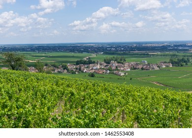 View of Pommard and Beaune lost in the vineyard in Burgundy (Bourgogne) home of pinot noir and chardonnay
