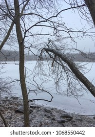View of pond covered with ice