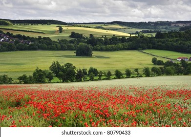 View of poppies in wheat field in English countryside landscape