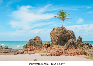 View of Praia de Tambaba beach, Costa do Conde. Famous beach by the coconut tree that grew on top of a rock. Beautiful Brazilian northeast beach. Conde PB, brazil.