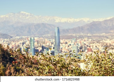 View of Providencia, Santiago de Chile with Los Andes mountain range in the back. Photographed from Cerro San Cristobal. Focus on plants