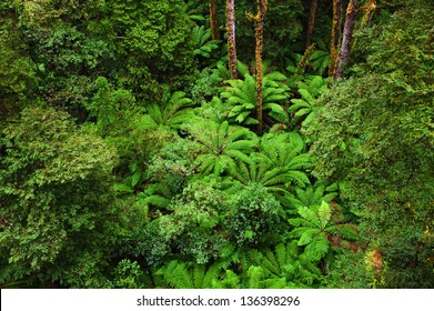 View of the Rainforest floor in rain from the Tree Top Walk of  Otway Fly up to 30 meters above ground level,Great Ocean Road, Australia