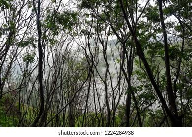 View of rainforest on island Samosir, Lake Toba, Indonesia
